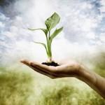 Imperishable Seed