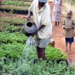 Plantando y Regando