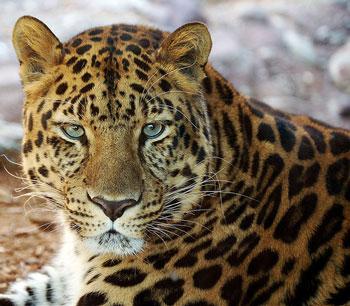 Spots_of_a_Leopard